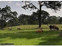 Land/Barn/Compound needed Urgently
