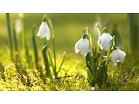 Companion/Care/Housekeeper or Aid to busy individual..Warks/Worcs/N.Oxon