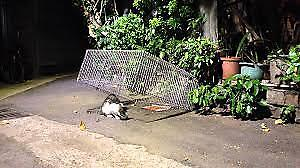 Need someone to trap your feral cat for fixing? (TNR)