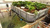 looking to start an aquaponic/polyculture farm