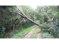 Wanted fallen hardwood trees ( Ballyclare, Antrim, Larne, Ballymena, Newtownabbey )