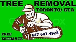TREE CUTTING REMOVAL STUMP GRINDING  CHIPPING 647-607-4924