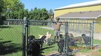KENNEL ATTENDANT- If you love dogs this job is perfect!