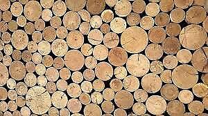 Bois de chauffage rond vert (majorité pin blanc)