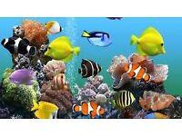 aquarium pump heater ornaments etc