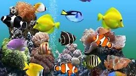 8 tropical fish for sale.