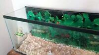 Fish tank for small animal or reptile