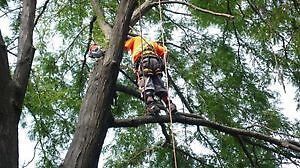AFFORDABLE TREE REMOVAL & CONTRACTING SERVICE'S Cambridge Kitchener Area image 2