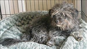 """Young Female Dog - Terrier: """"Kiddy"""""""