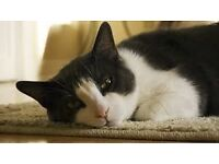 Missing black and white male cat answers to Feelemone Macduff, Scotland