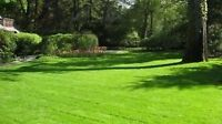 Young strong and reliable lawn and property maintenance