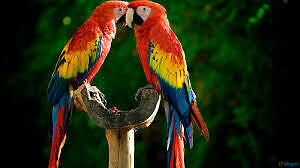 ❤The Parrot Lodge❤- bird and parrot sitting