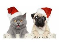 Dog Boarding over the Christmas period. Are you reluctant to put your fur baby in kennels?