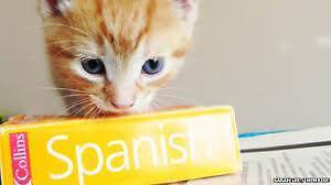 Learn Spanish: Easy & Fast Maitland Maitland Area Preview