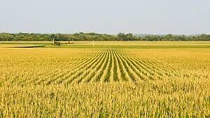 Looking For Farm Land Investors