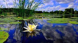 Fall pond closing/ cleaning/ maintenance Kitchener / Waterloo Kitchener Area image 3