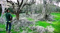 Great rate tree removal & yard maintenance 780-807-7688