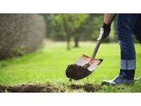 Landscape gardener/Labour Urgently looking for work