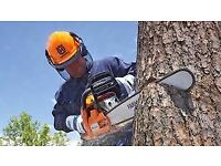 TREE SURGEON-7 DAY SERVICE-TREES CUT DOWN / BACK -HEDGES -BRANCHES-OVERHANGS CLEARED- 2 MEN 7 DAYS.