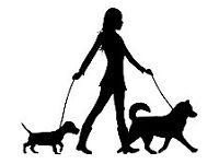 Dog Walker Belfast Area