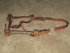 Weanling Quarter Horse Western Show Halter Silver TAN Leather London Ontario image 1