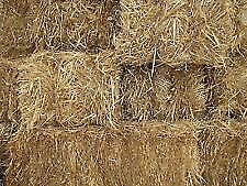 Straw Small bales of Barley Straw