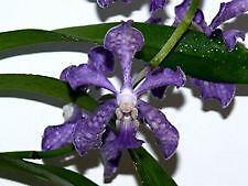 orchid ebay. Black Bedroom Furniture Sets. Home Design Ideas