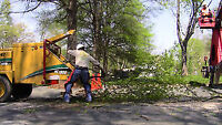 Tree removal Affordable rate.