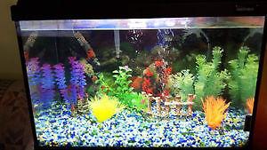 aquarium 25 gallon et meuble
