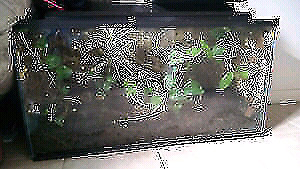 Tropical vivarium for sale