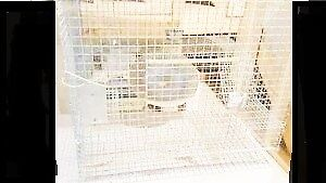 Multi-Level, Easy-To-Clean Chinchilla /Rabbit Cage with Saucer