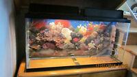 Gros aquarium (35 gallons)