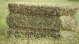 Hay and Straw in Small bales