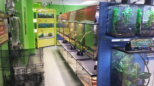 Reptiles, Snakes, Lizards and Feeders Cambridge Kitchener Area image 2