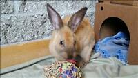 "Baby Male Rabbit - American: ""Dougay"""
