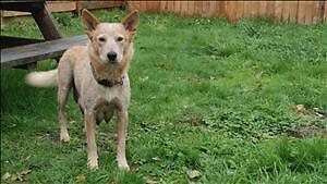 """Adult Female Dog: """"Nikka"""""""