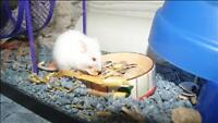 "Young Female Small & Furry - Mouse: ""Jade"""