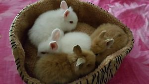 Bunnies for sale
