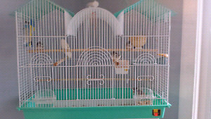 Large new cage