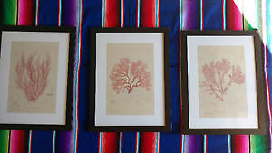 Red coral wall pictures
