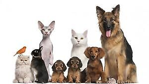 LC's Pet Sitting Services
