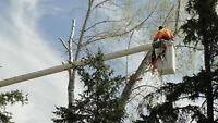 TREE SERVICE & STUMP GRINDER  UNDER-CUTTERS 1-306-291-0406