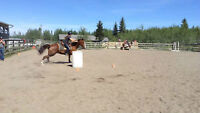 Western Riding and Barrel Racing Lessons