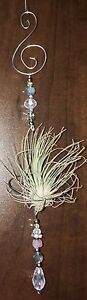 Air plant and holder