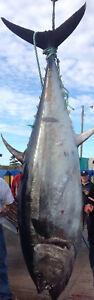 Tuna License