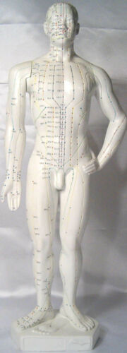 "20"" human Chinese acupuncture model anatomy anatomical sculpture figurine  New"