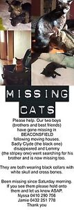 TWO LOST PET CATS :( Beaconsfield Fremantle Area Preview