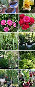 Plants, fruit trees, ceramic pots, terracotta pots