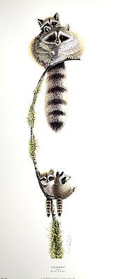 """WARWICK HIGGS """"Piggyback"""" RACCOON baby BROWSE OUR SHOP! SIZE:70cm x 30cm  RARE"""