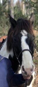 Horse partboard